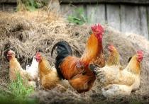 О первом случае заражения людей штаммом H5N8 вируса птичьего гриппа А сообщила сегодня главный санврач страны Анна Попова