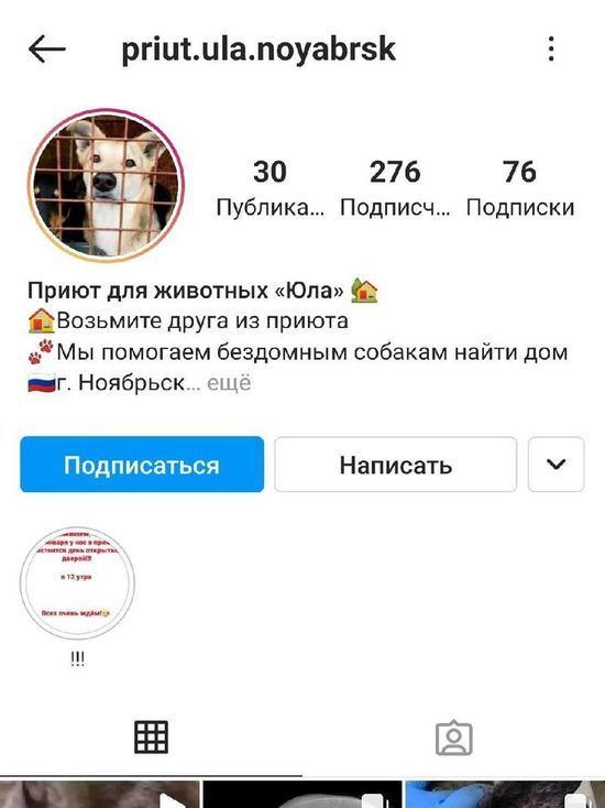 «Разводившие» жителей Салехарда мошенники теперь собирают деньги от имени приюта для животных Ноябрьска