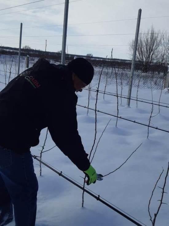 Аграрии Ставрополья обучаются выращиванию суперинтенсивных садов