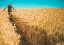 В Тюменской области открывается «Школа фермера»