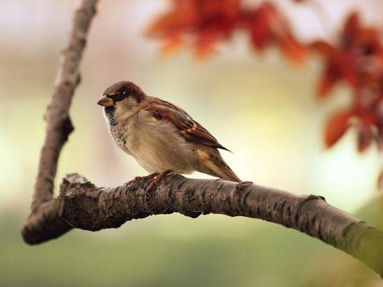 Вирусолог дал советы, как защититься от птичьего гриппа