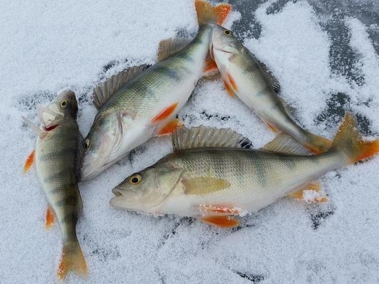 Псковские профсоюзы примут участие в состязании по подледной рыбалке
