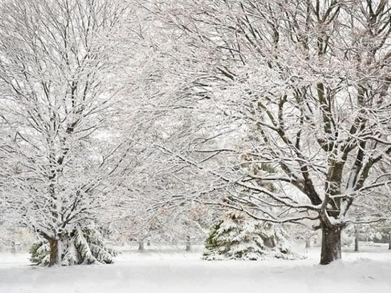 На Дону в начале недели прогнозируют снег и морозы