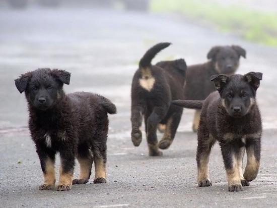 Житель Северной Осетии попался на жестокости к животным благодаря соцсетям