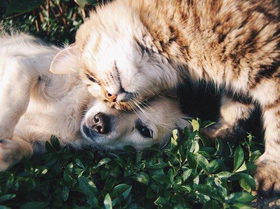 Нижегородцы могут стерилизовать собак и котов по льготной цене