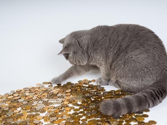 Новые социальные выплаты с 1 марта: изменения, кому и сколько положено