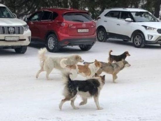 В локальном паблике «Лузино» в соцсети «ВКонтакте» вышел проблемный материал за авторством сразу шести активных местных жителей, который посвящён бездомным собакам
