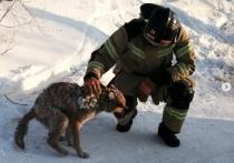 Пожарные спасли собаку из-под завалов сгоревшего дома в Лабытнанги