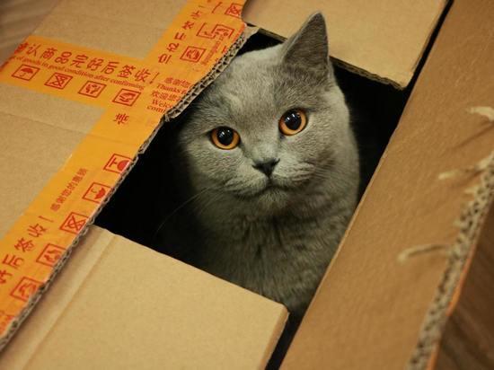 Зоопсихолог объяснил тягу кошек к картонным коробкам и нелюбовь к домикам для сна