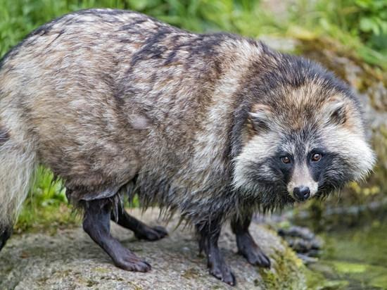 Бешеный зверь попал на территорию охотников в Тверской области