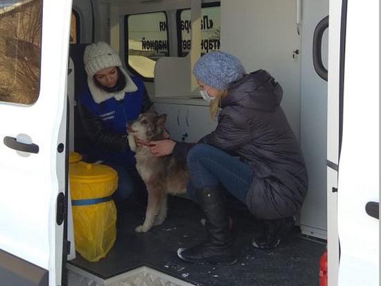 В Красноярске бесплатно вакцинируют от бешенства кошек и собак