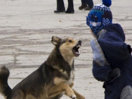 В Нижегородской области бездомная собака покусала ребенка