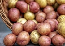 Новый завод в Упорово переработал и реализовал 1275 тонн картофеля