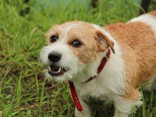 Владельцам агрессивных собак придется заплатить серьезные штрафы в Кузбассе