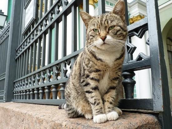 В России появился профсоюз музейных котов
