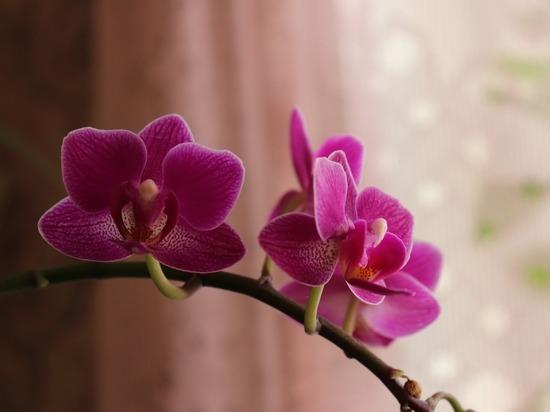 Идеальный подарок: как выбрать цветок в горшке на 8 Марта