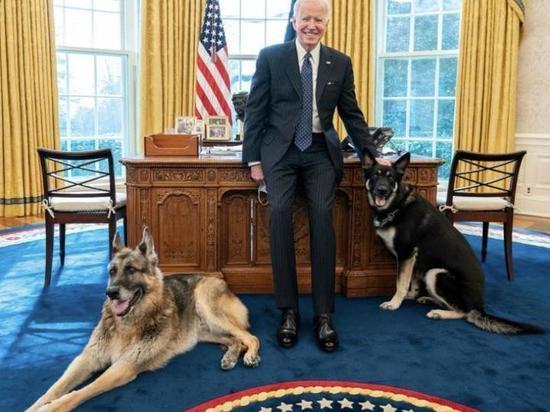 В Белом доме впервые появилось животное из приюта
