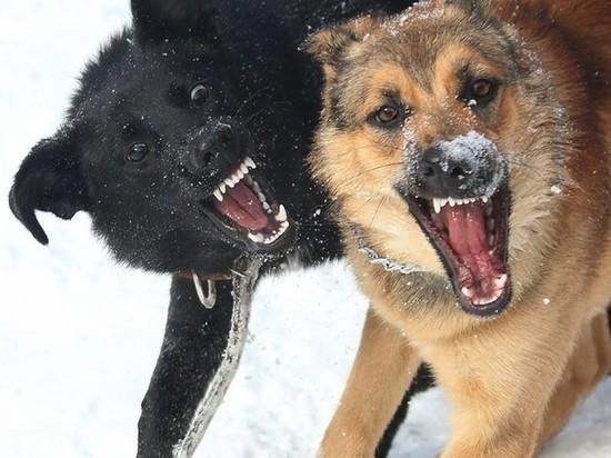 Тверские следователи разбираются в нападении собак на женщину