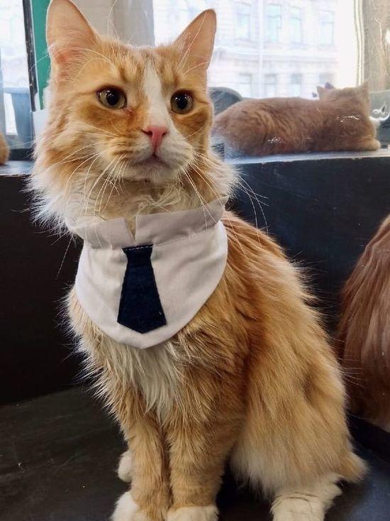 Первый в России профсоюз музейных котов решили создать в Петербурге