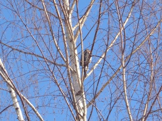 В Тверской области ястреб утащил из стаи птицу