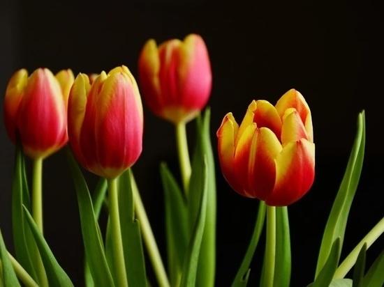 Цветы на 8 Марта в Хабаровске: сколько стоят, как выбрать