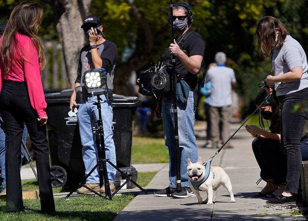 Леди Гага стала жертвой дерзкого нападения: украли собак, ранили помощника
