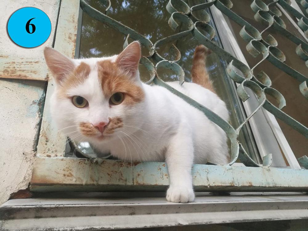 Фотоконкурс «Мартовский кот» от «МК в Хабаровске»