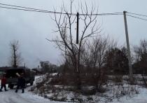 В Черногорске неизвестные спилили на дрова электрический столб