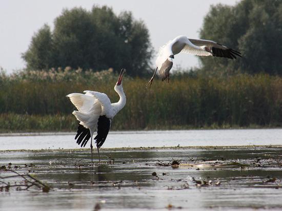 Международная выставка фото редких птиц впервые откроется на Ямале