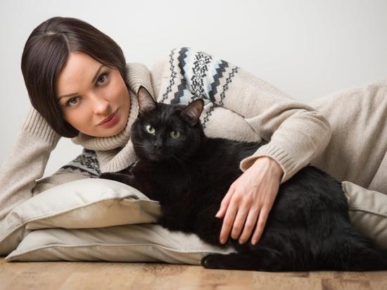 Пушистое счастье: ярославцы больше любят кошек, чем собак