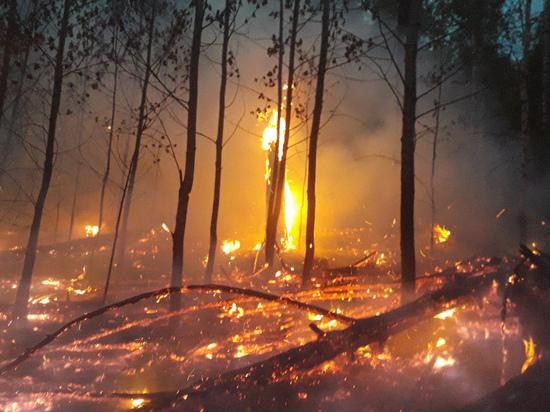 Гурулёв: Более 550 млн рублей нужно Забайкалью на тушение лесных пожаров