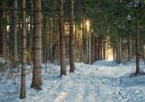 Регион один из первых в стране выполнил задачу, поставленную президентом Путиным: перейти от экспорта леса-сырца к поставкам за рубеж продукции глубокой переработки с высокой добавленной стоимостью