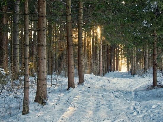 В Томской области в ближайшие два года  построят лесовосстановительный центр