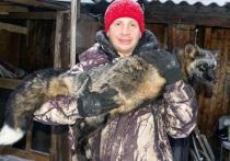 Спасенный лис может стать Томской достопримечательностью или даже фотомоделью