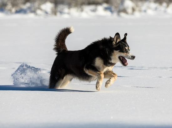 Массовый отлов собак в Сеяхе проведут из-за случая бешенства