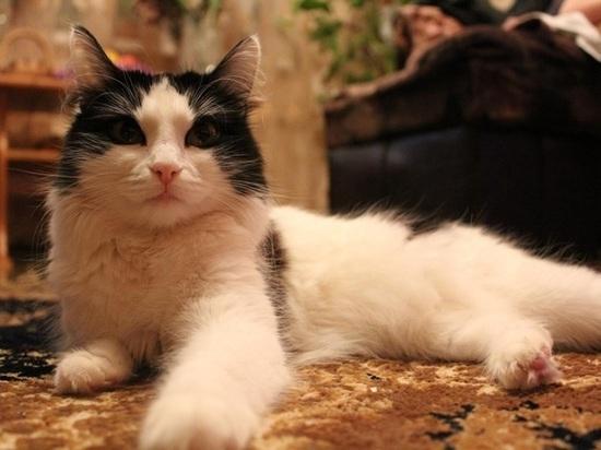 Жители Оренбургской области отметили День кошек