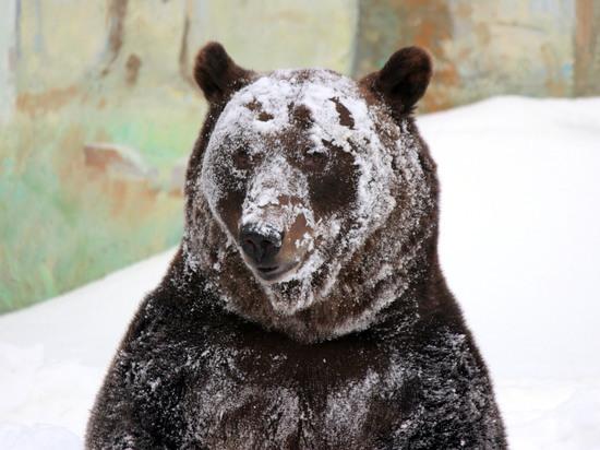 """В зоопарке """"Лимпопо"""" вышел из спячки бурый медведь"""
