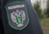 В Рязани гипермаркеты «Метро» и «Глобус» оштрафовали на 350 тысяч