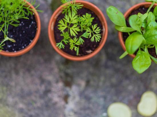Микроферма за неделю: как вырастить зелень на подоконнике