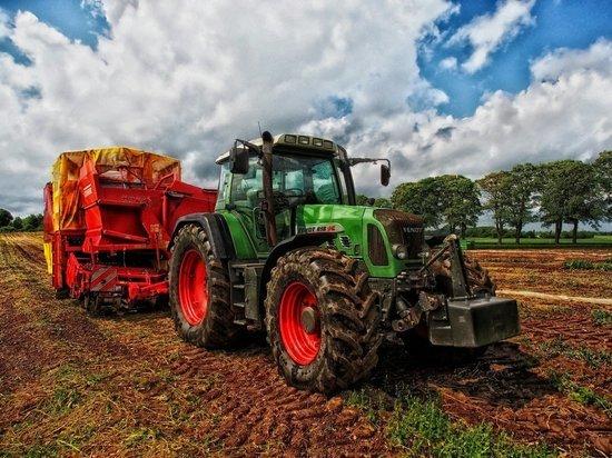 Россия нарастила экспорт пшеницы более чем на четверть