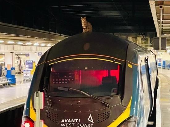 Наглый кот на два часа задержал скоростной поезд в Лондоне