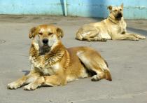 Массовую травлю бездомных собак начали неизвестные злоумышленники в Зарайске