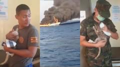 Матросы ВМФ Тайланда спасли четырех котят с тонущего корабля