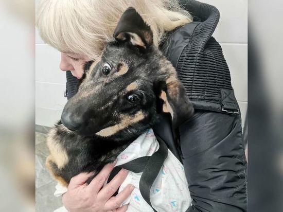 Живодеры в Псковской области изувечили собаку