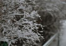 Снегопад, метель и штормовой ветер обещают в Рязанской области в воскресенье