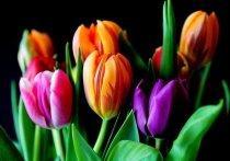 Поставки цветов в Россию в преддверии Международного женского дня выросли в два раза