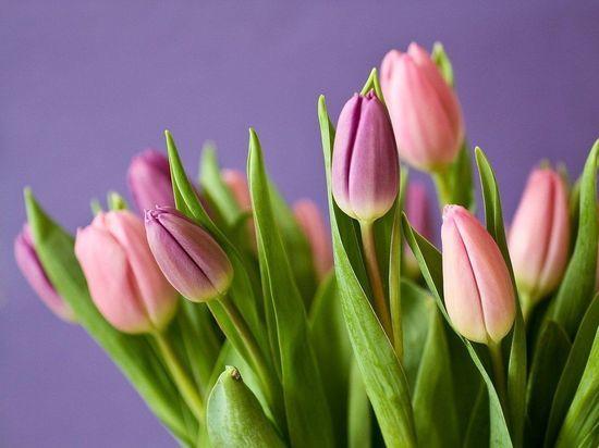Поздравления с 8 марта для женщин - традиционная часть праздника