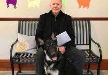 Двух немецких овчарок, принадлежащих президенту Джо Байдену и первой леди США Джилл, вернули в дом семьи Байденов в Делавэре после агрессивного поведения одного из псов в Белом доме