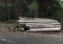 Более 6 600 кубометров древесины вывезли из Владимирской области в начале года