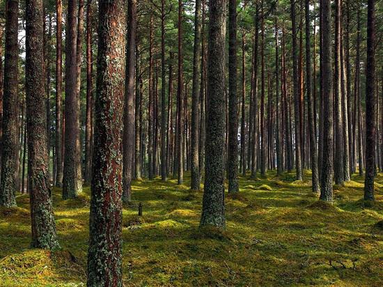 Лесной фонд Тверской области вновь увеличится